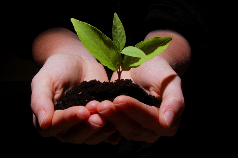 young plant in hands showing concept of environment and growth