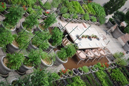 A restaurant table surrounded by planters with herbs