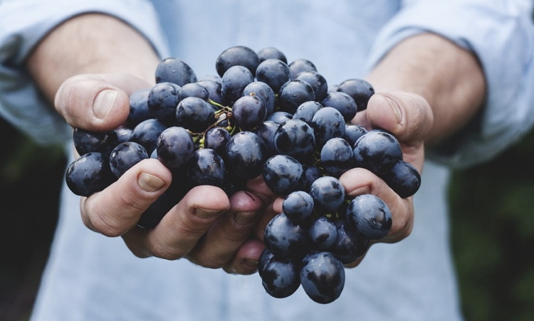 A man holding grapes in his hands