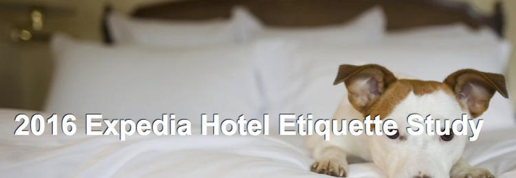 Image from Expedia report - a dog lying on a hotel bed