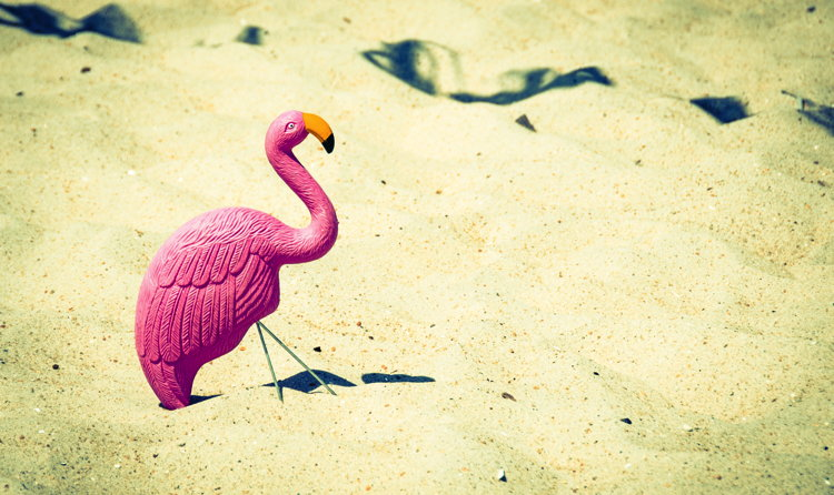 A pink flamingo on a beach