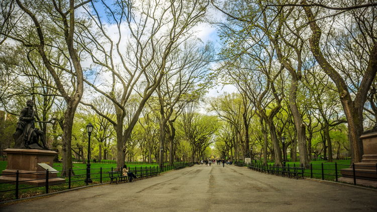 DeskBell: Saving Central Park