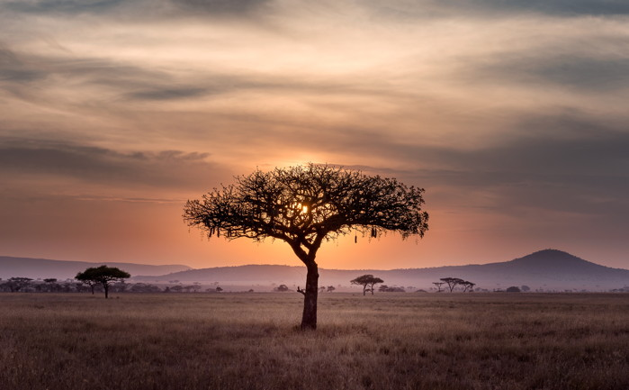Serengeti, Tanzania - Photo by Chen Hu on Unsplash