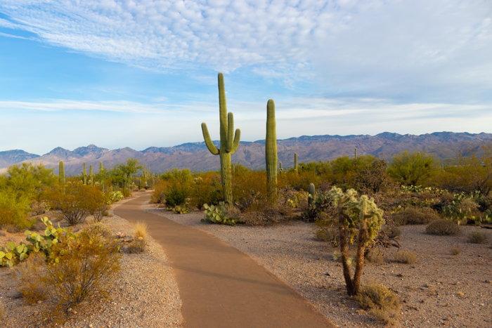 Saguaro National Park, United States - Photo by Christoph von Gellhorn on Unsplash