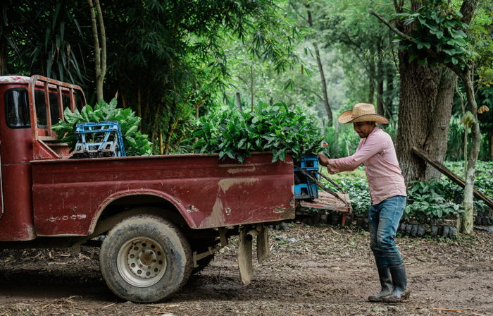 Coffee farmer loading a truck