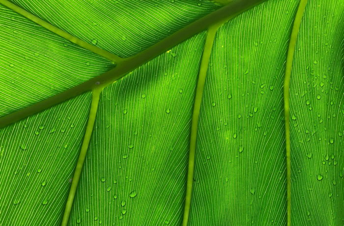 Close up of the palm tree leaf with water drops on it - Photo by Nicholas Stanley on Unsplash