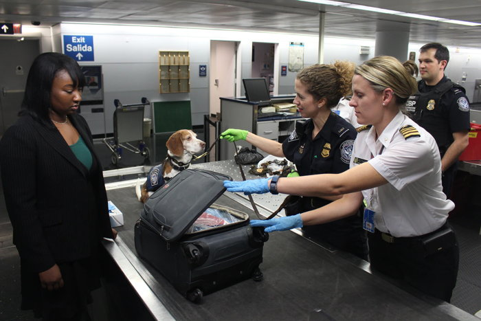 In this image, captured at Chicago's O'Hare International Airport, Enya, a Customs and Border Protection (CBP) dog, had sniffed out a possible banned item in baggage claim. - Unsplash