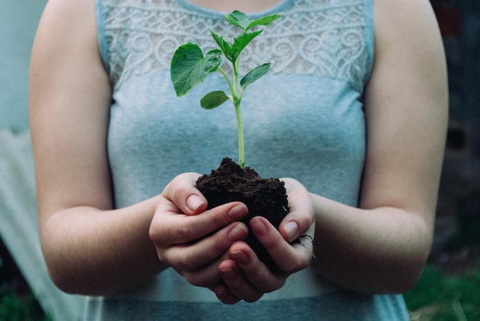 A woman holding a seedling - Unsplash