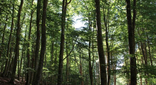 Summer forest - Unsplash