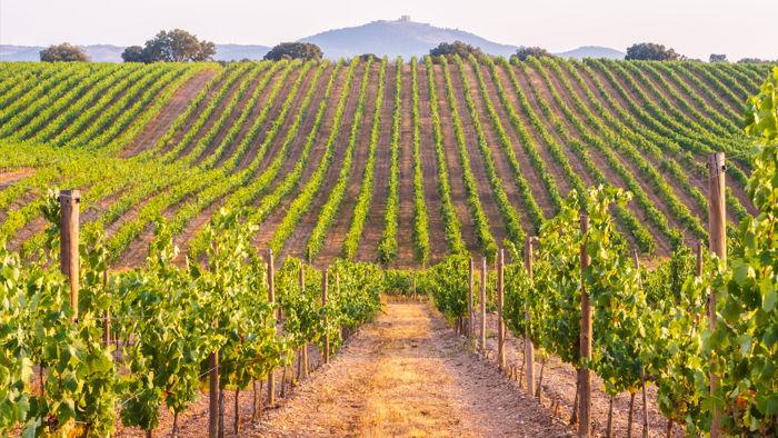 A vineyard - Source UNWTO